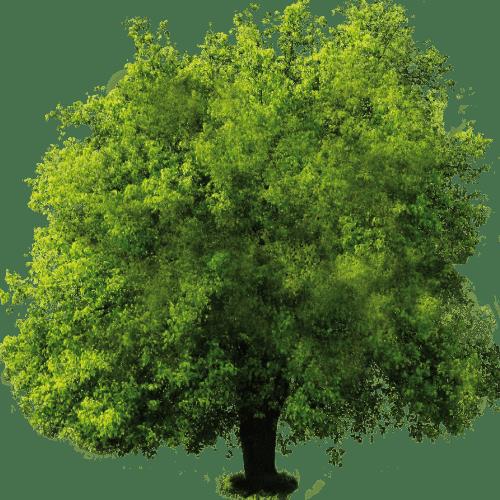 Soluzioni costruttive sostenibili nella produzione di Laterizi e Poroton Bio e naturali